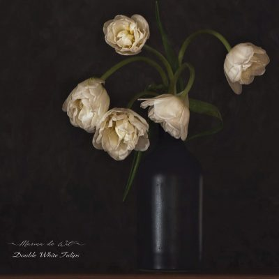 Double White Tulips from Honeysuckleflowers by Marina de Wit Various sizes available